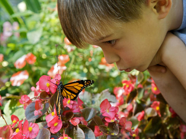 Boy_with_Monarch_Butterfly_(4731214604)